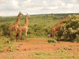 Africa 089