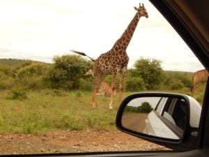 Africa 107