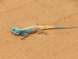 Africa 207